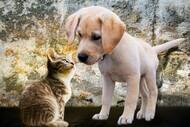Cachorro e gato (Imagem Pxfuel)