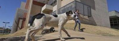 Reunião da campanha para posse responsável de animais