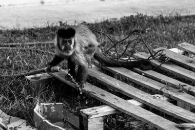 Foto macaco