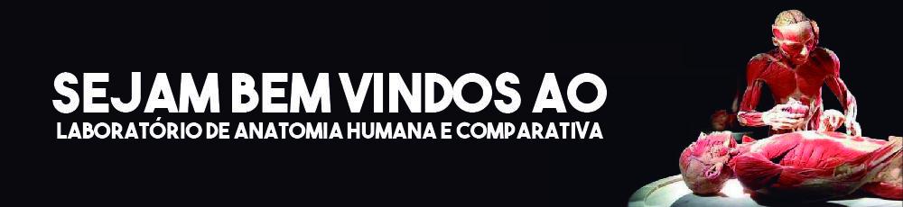 Banner Laboratorio Anatomia Humana