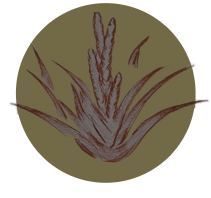 CAROÁ - Logo