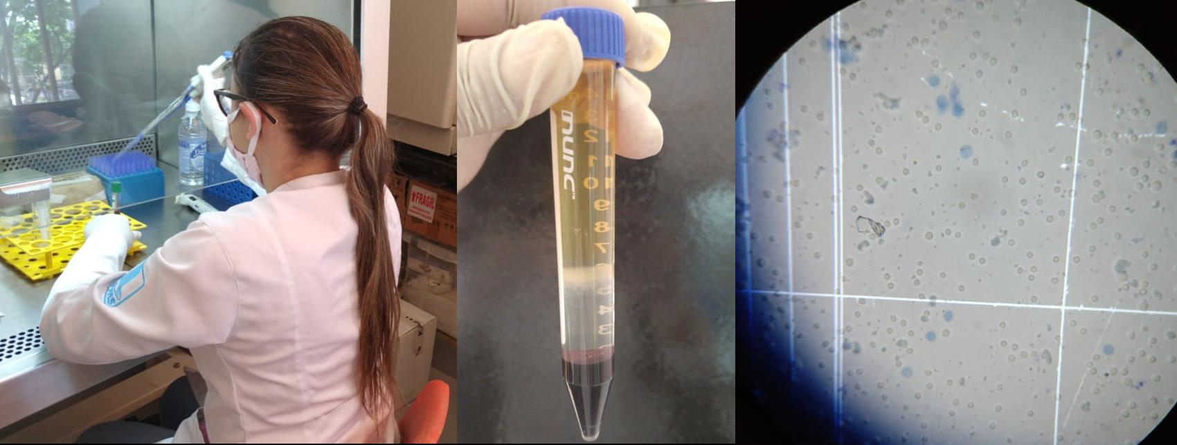 treinamento processamento de amostras biológicas