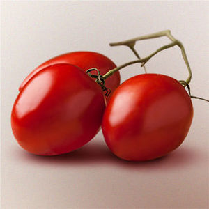 10º CBTI – Congresso Brasileiro de Tomate Industrial
