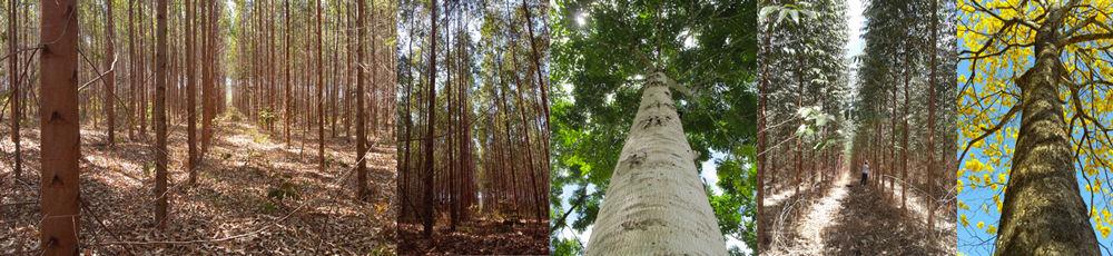 Genética e Melhoramento Florestal