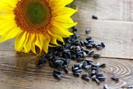 Guia eletrônico permite identificar espécies vegetais por meio das sementes