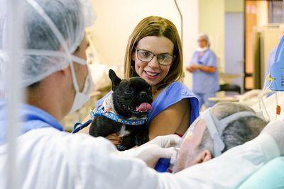 Capa terapia assistida animais