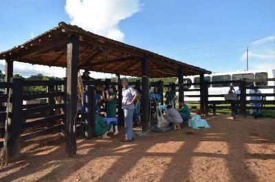 Projeto Luiz Franco Veterinária