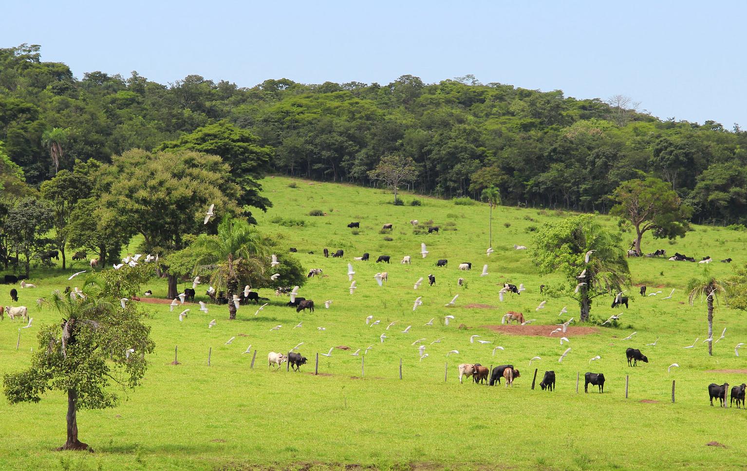 Pastagem Brasil