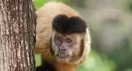 macacos e a febre amarela