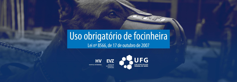 FOCINHEIRA_HV_UFG (1).jpg