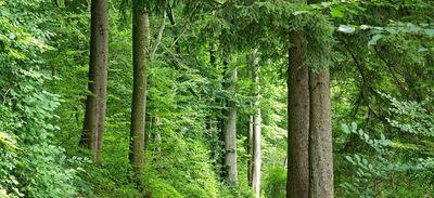Florestal