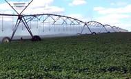 Banner Artigo Irrigação