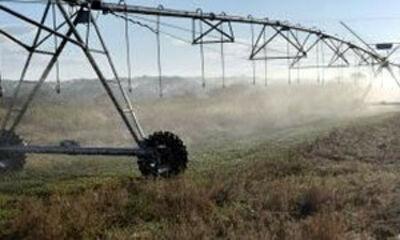 Banner Irrigação Tomate Industrial