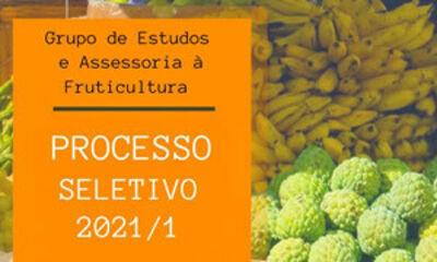 Banner Seleção Grupo de Estudos e Assessoria à Fruticultura