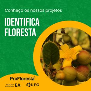 Identifica Floresta
