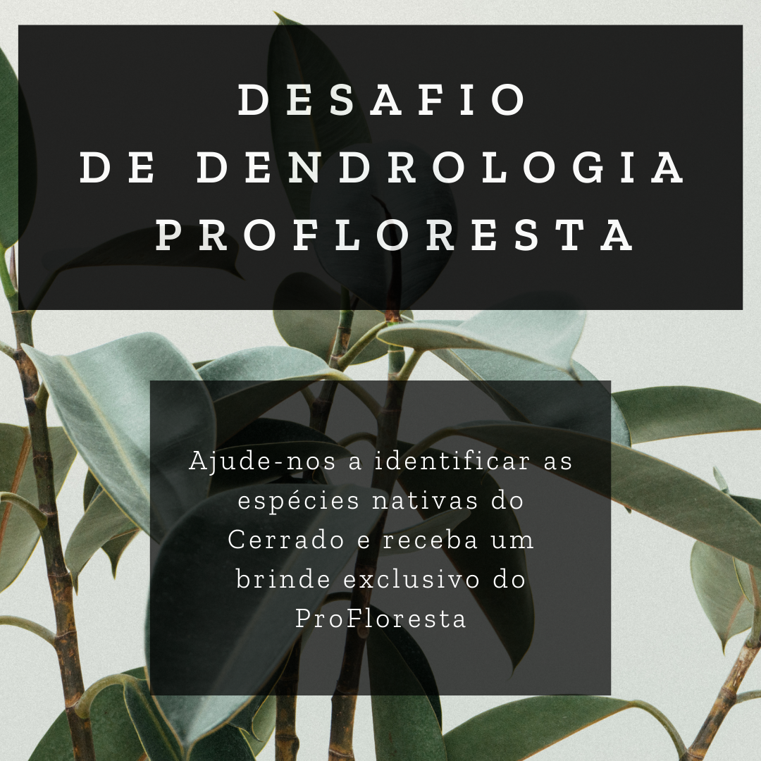 Desafio de Dendrologia
