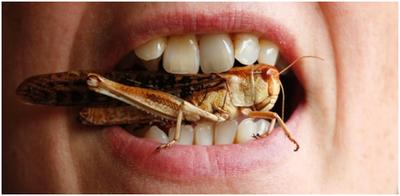 imagem inseto capa
