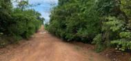 Notícia - Projeto Legado Verdes do Cerrado - Prof. Dr. Marcos José da Silva