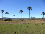 Vereda - Parque Estadual da Chapada dos Veadeiros. Fotografia: Marcos Jose da Silva