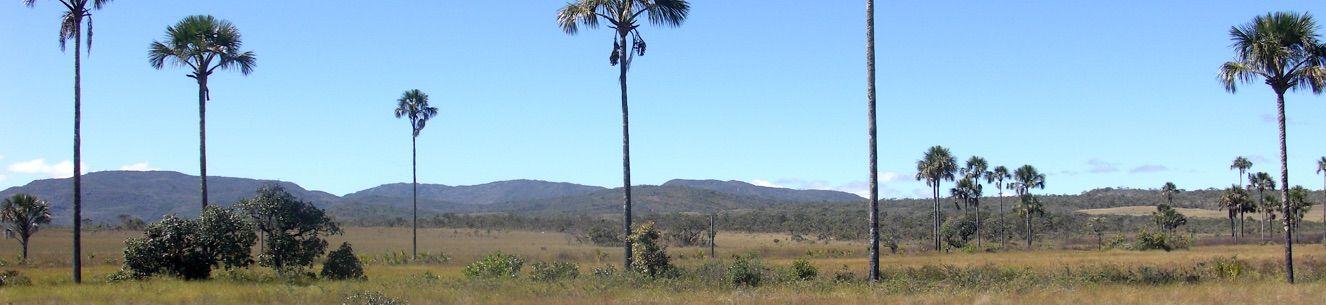 Vereda - Parque Nacional da Chapada dos Veadeiros. Fotografia: Marcos José da Silva