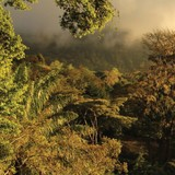 Revista de Biologia Neotropical - Banner