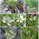 Noticia - Redescoberta Euphorbia - Marcos 2