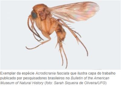 Pesquisa_mosquito